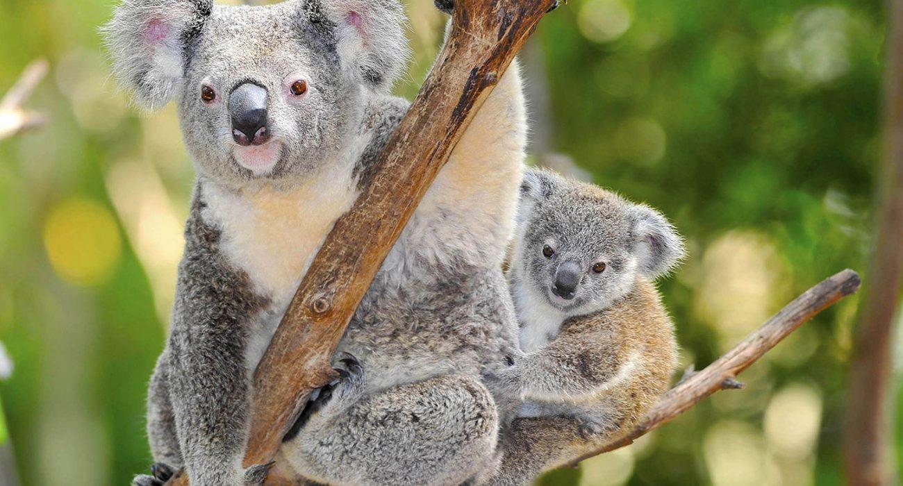 Australia_Stpeter institute 2